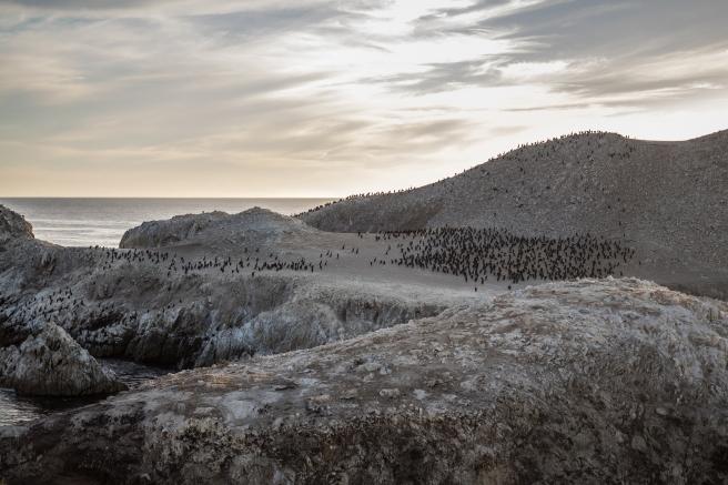 Point Lobos Reserve - Ilha dos pássaros